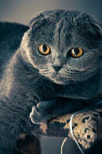 Cat Arthritis