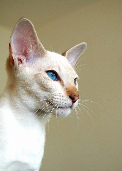 Cat arthritis symptoms diagnosis